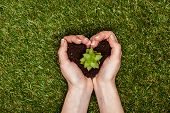 Cropped Image Of Woman Holding Heart Shaped Soil With Succulent In Hands Above Green Grass, Earth Da poster
