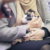 Frightened Black And White Kitten In The Hands Of Girl Volunteer, In Shelter For Homeless Animals. G poster