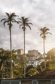 Vertical Shot Of The Three Palms In Urban Settings: A Residential District With Multiple Block Of Fl poster