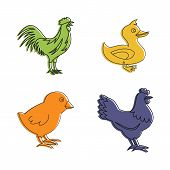 Domestic Bird Icon Set. Color Outline Set Of Domestic Bird Vector Icons For Web Design Isolated On W poster