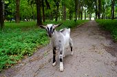 stock photo of bestiality  - The small gray kid walks in park - JPG