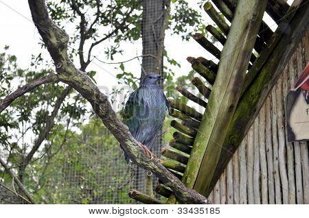 Large Blue Parrot