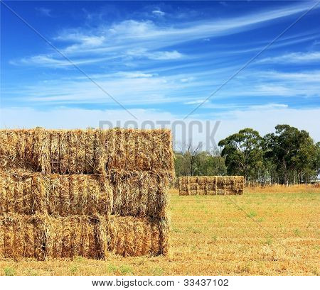 Mown Hay Harvested In Large Briquettes