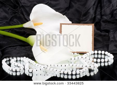 The beautiful white Calla lilies on a black background with a banner add
