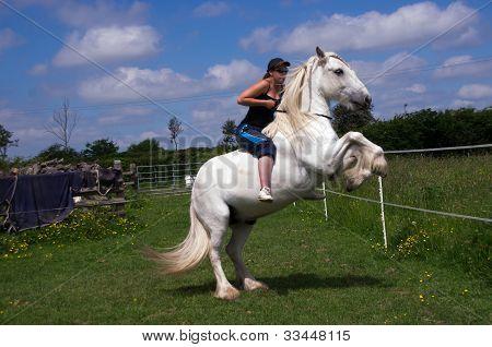 Naughty horse