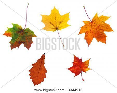 Full-Size zusammengesetzte Foto von verschiedenen Autumn Leaves Isolated On White Background