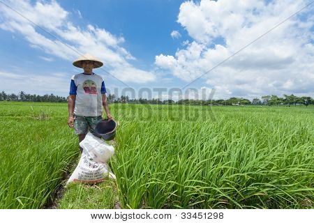 Rice Farmer In Bali