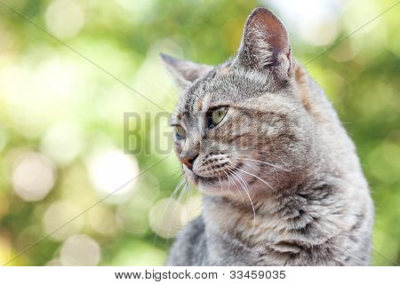 Portrait Of A Striped Cat Outdoor