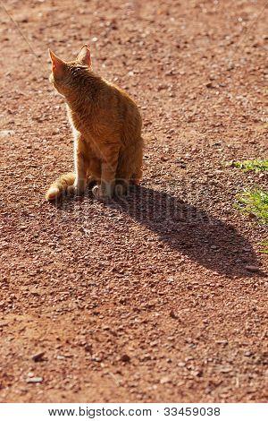 Retrato de um gato de rua ao ar livre