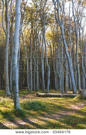 Nienhagen Wood, Germany