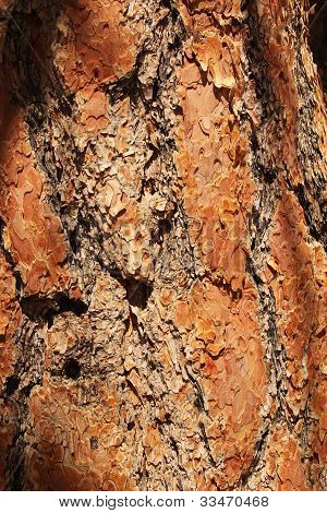 Bark's Close Up