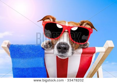dog sunbathing with a towel and sunglasses