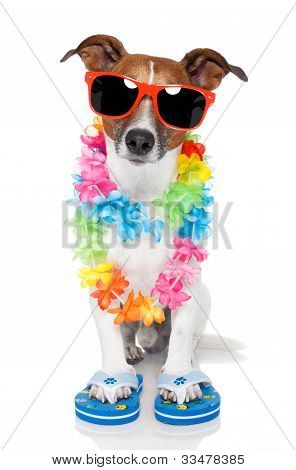 Touristische Hund mit hawaiian Lei und Schattierungen