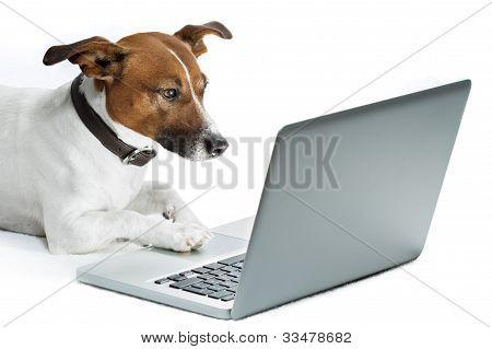 Computador de cão