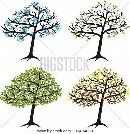 Season Tree For Winter, Spring, Summer, Autumn