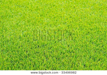 Mown Green Grass