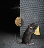 Rat With Cheese Hides From Cat 2 poster