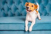 Soft Sofa. Furniture Background. Dog Lies On Turquoise Velour Sofa. Cozy And Comfortable Home Interi poster