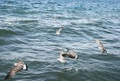 Seagulls On Lake Sevan