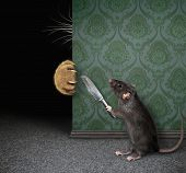 Rat With Knife Hides From Cat poster