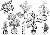 Collection Of Sketchy Houseplants. Hand Drawn Black And White Vector Illustration. poster
