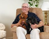 stock photo of bifocals  - Portrait of an elderly man and his two dogs in their living room - JPG