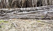 Driftwoods. Grey Tree Branches Lying Over The Water, Dry Dead Wood In A Lake poster