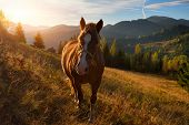 Brown Horse On A Mountain Pasture On The Background Of Sky And Autumn Mountains. Sunny Autumn Mornin poster