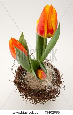 Páscoa tulipas laranja