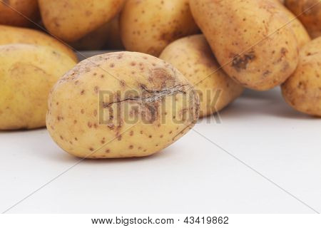 Potato Damaged During Harvesting