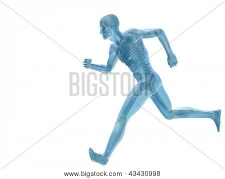 High resolution conceptual man or human 3D anatomy or body illustration isolated on white background