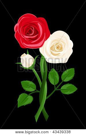 Red and white intertwined roses. Vector illustration.