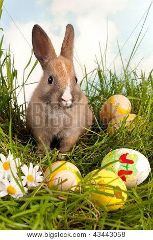 Cute baby easter bunny with easter eggs in grass