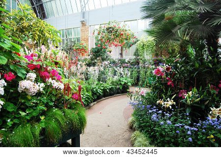 Plants At Greenhouse