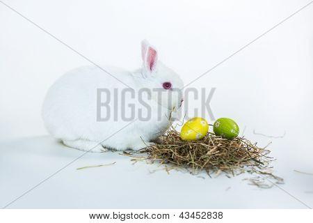 White bunny beside nest of easter eggs on white background