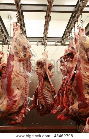 Cattle Carcass Maturing In A Refrigerator