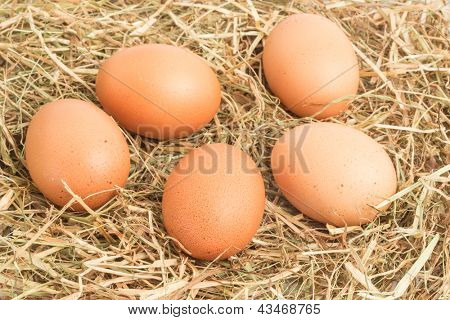 Five eggs nestled in straw nest