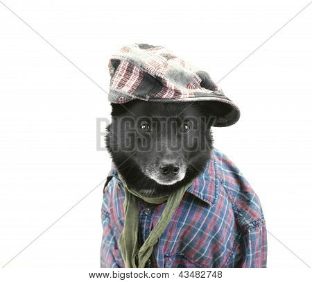 Dog In Casual Dress