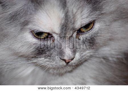 Cat Closup