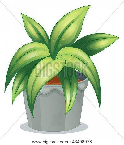 Ilustración de una planta de hojas alargadas sobre un fondo blanco