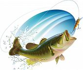 stock photo of catching fish  - Largemouth bass is catching a bite and jumping in water spray - JPG