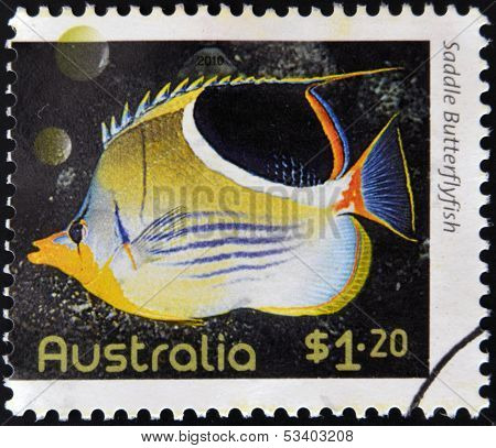 AUSTRALIA - CIRCA 2010: A stamp printed in Australia shows an image of saddle butterflyfish