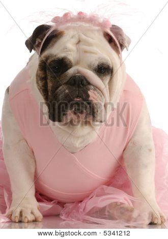 English Bulldog In Pink Tutu
