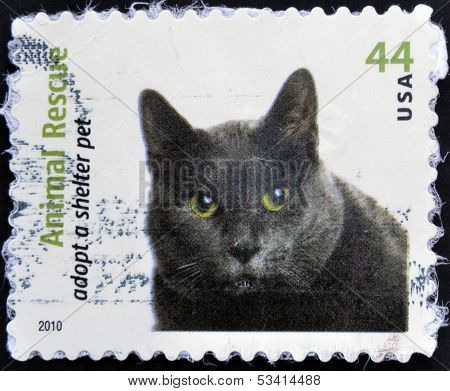 A stamp printed in USA dedicated to animal rescue adopt a shelter pet shows a cat