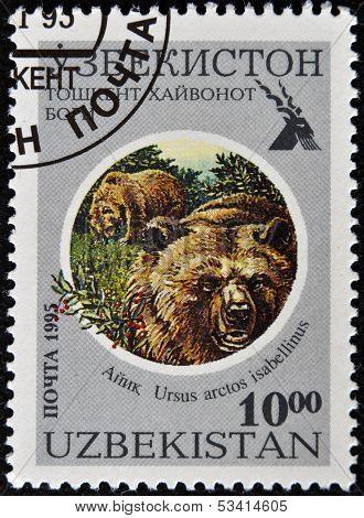 UZBEKISTAN - CIRCA 1995: A stamp printed in Uzbekistan shows Ursus arctos isabellinus circa 1961