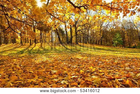 Golden Autumn In Moscow