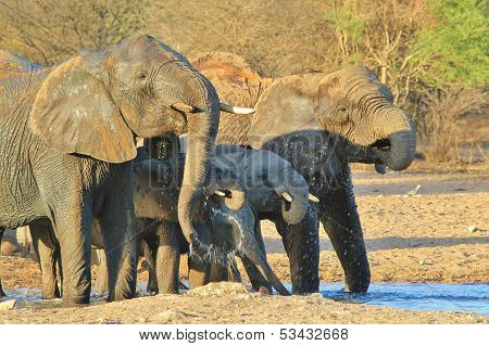 Elephant - Wildlife Background from Africa - Splash of Cool
