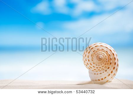 niceseashell  with ocean , beach and seascape, shallow dof