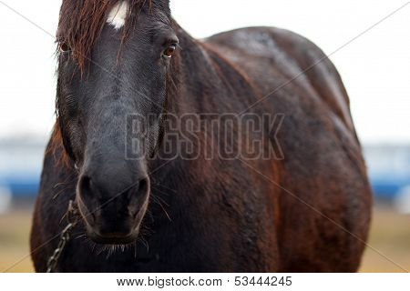 Horse on pasture in Autumn