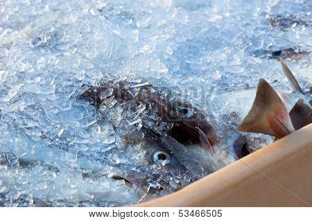 Catch Of The Day - Fresh Fish In Shipping Container